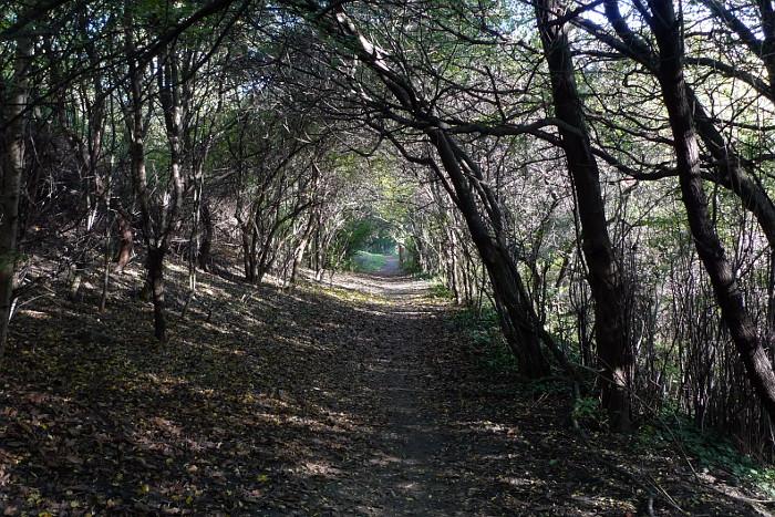 Cesta u Proseckých skal